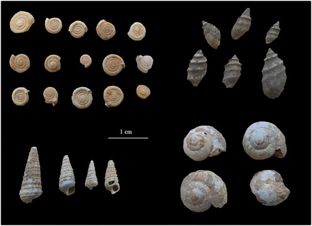 Gasteropodos continentales