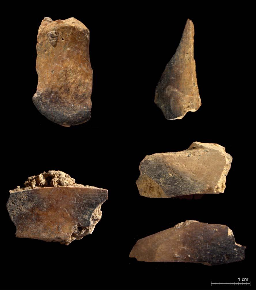 Cremación diferencial de algunos restos óseos del nivel IV (Blasco y Fernández Peris, in press)