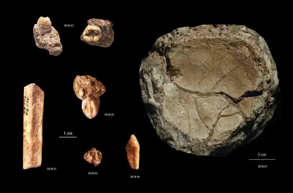 Conjunto de restos fosiles humanos recuperados en Cova del Bolomor (2003).